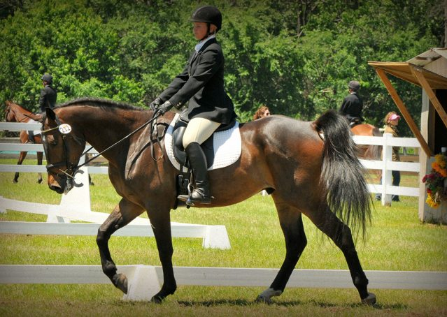 019-Beijing-dutch-warmblood-for-sale