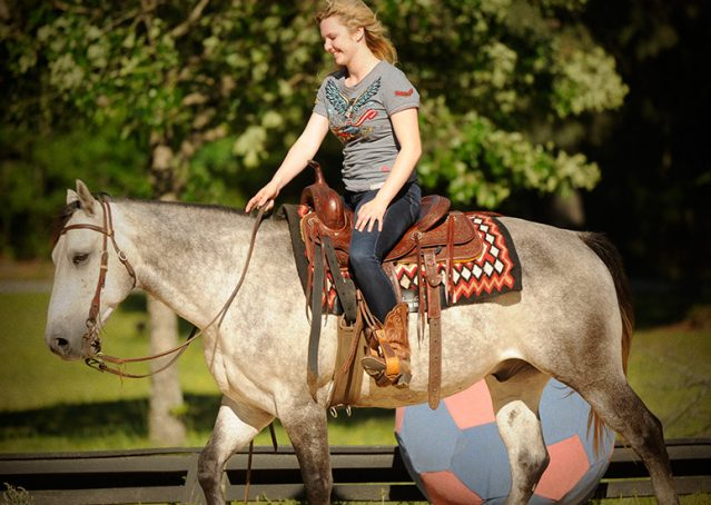 019-Casper-Grey-Quarter-Horse-Gelding-For-Sale
