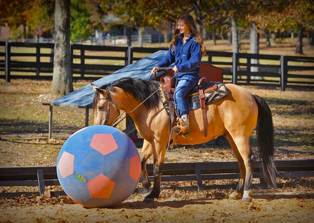 019-Hotrod-AQHA-Buckskin-Gleding-For-Sale