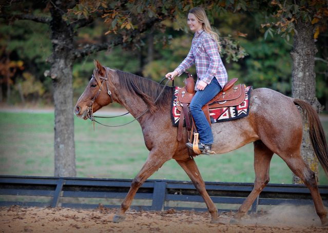 019-Jack-Frost-AQHA-Red-Roan-Gelding-For-Sale