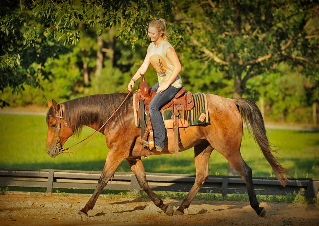 019-Jasper-Bay-Roan-Quarter-horse-gelding-for-sale