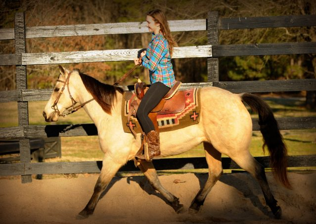 019-Kody-Buckskin-AQHA-Gelding-For-sale