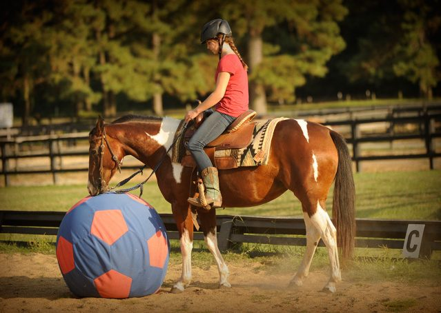 019-Lena-APHA-mare-for-sale