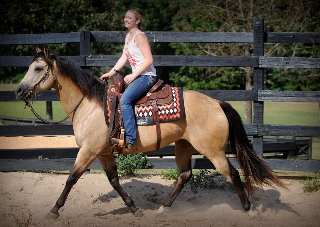 019-Leo3-Buckskin-AQHA-Gelding-For-Sale
