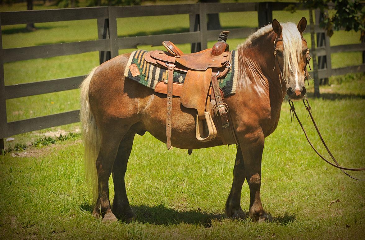 Peyton Horse Of My Dreams