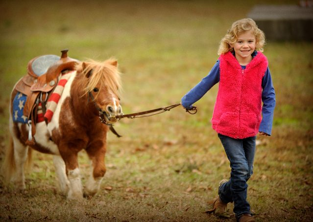 019-Poncho-Paint-pony-for-sale