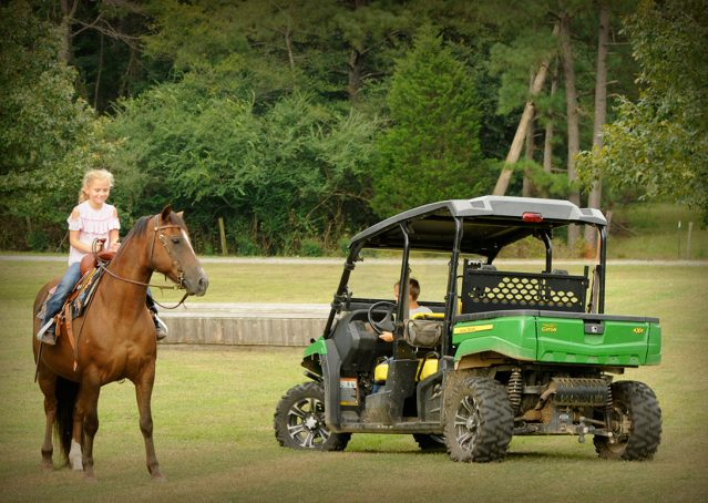 019-Stone-Bay-Quarter-Horse-Gelding-For-Sale
