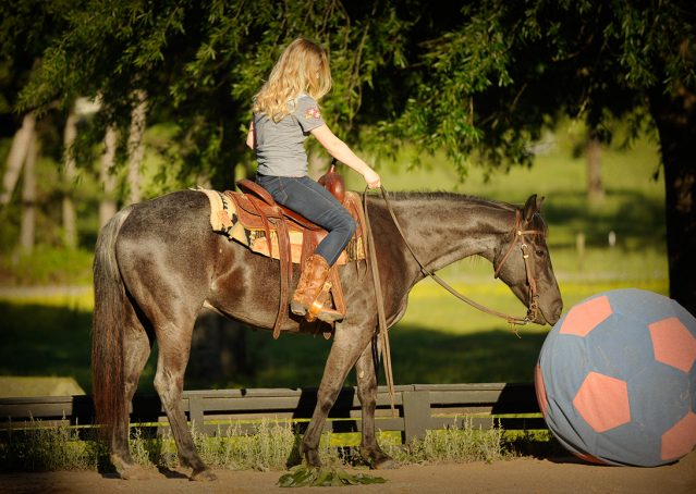 020-Blue3-AQHA-Blue-Roan-For-Sale