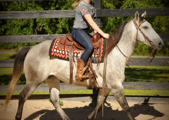 020-Casper-Grey-Quarter-Horse-Gelding-For-Sale