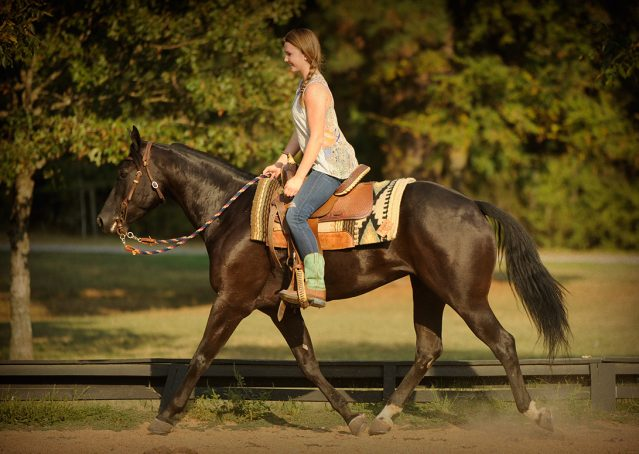 020-Hollywood-AQHA-gelding-for-sale