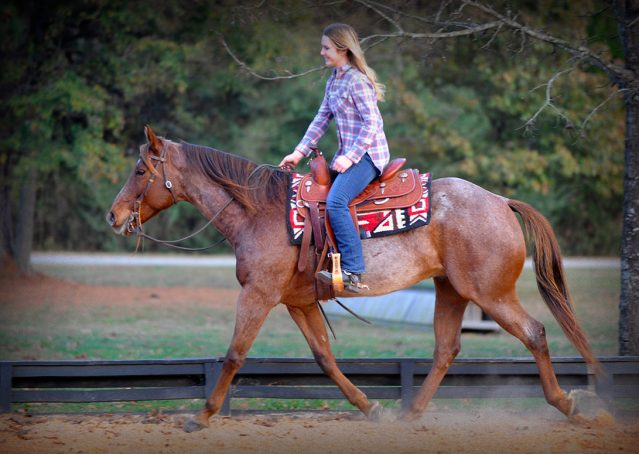 020-Jack-Frost-AQHA-Red-Roan-Gelding-For-Sale