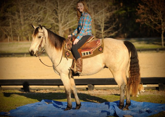 020-Kody-Buckskin-AQHA-Gelding-For-sale