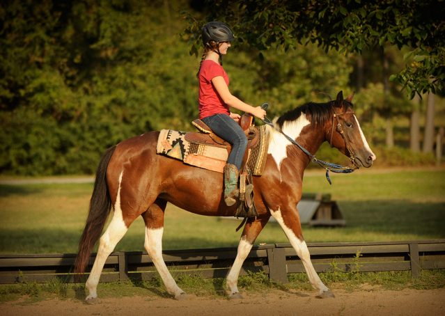020-Lena-APHA-mare-for-sale