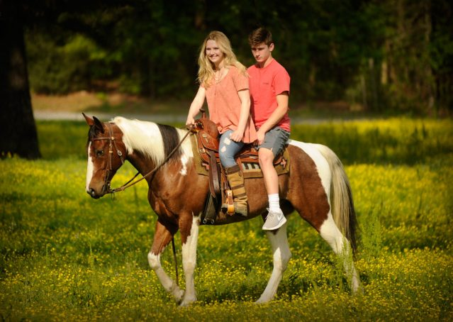 020-Rebel-APHA-Bay-Tobiano-Gelding-For-Sale