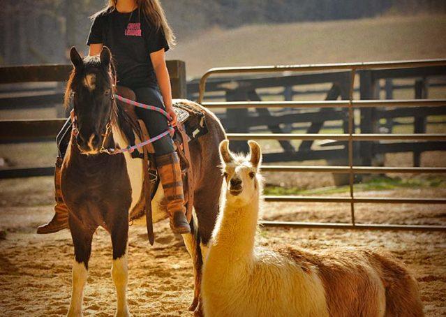 020-Rocky-paint-pony-gelding-for-sale