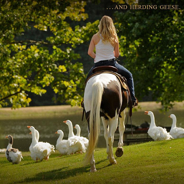020-hearding-geese