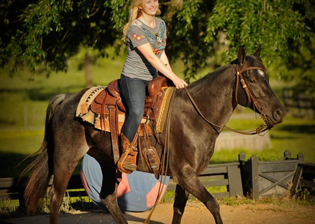 021-Blue3-AQHA-Blue-Roan-For-Sale