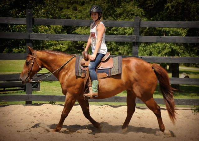 021-Clark-AQHA-horse-for-sale