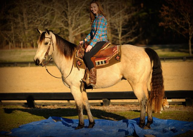 021-Kody-Buckskin-AQHA-Gelding-For-sale