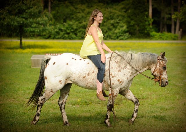 021-Shy-appaloosa-pony-for-sale