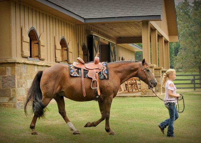 021-Stone-Bay-Quarter-Horse-Gelding-For-Sale