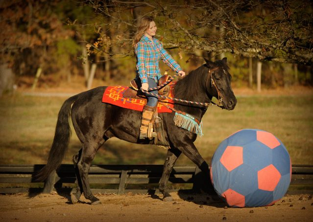 021-Thunder2-black-aqha-gelding-for-sale