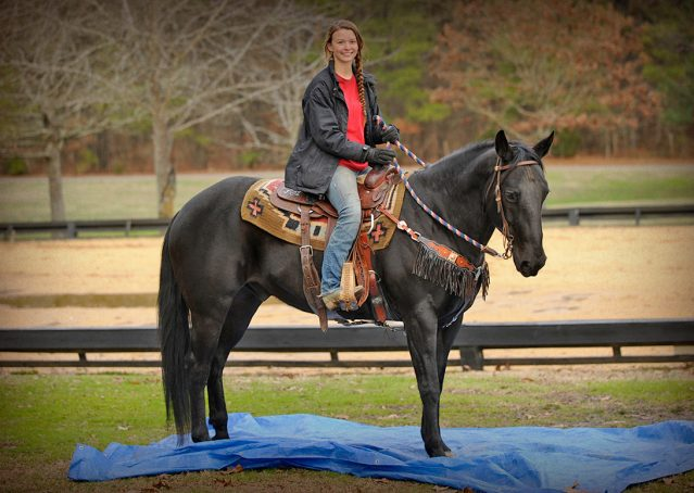 022-Cajun-Black-quarter-horse-for-sale