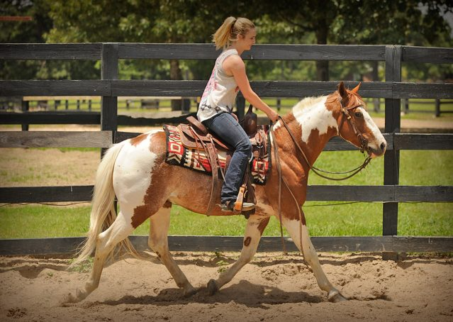 022-Cat-APHA-High-Brow-Cat-Bay-Tobiano-Gelding-For-Sale