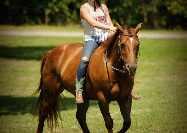 022-Clark-AQHA-horse-for-sale