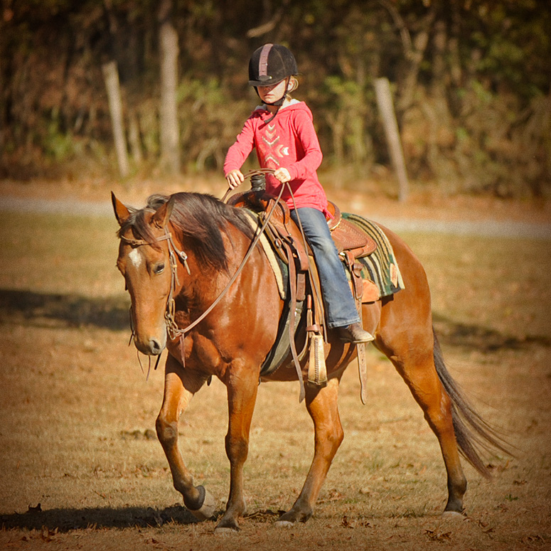 022-Dually2-Bay-AQHA-Gelding-For-Sale