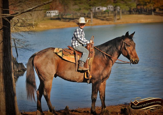 022-Romey-Bay-Roan-Gelding-For-Sale
