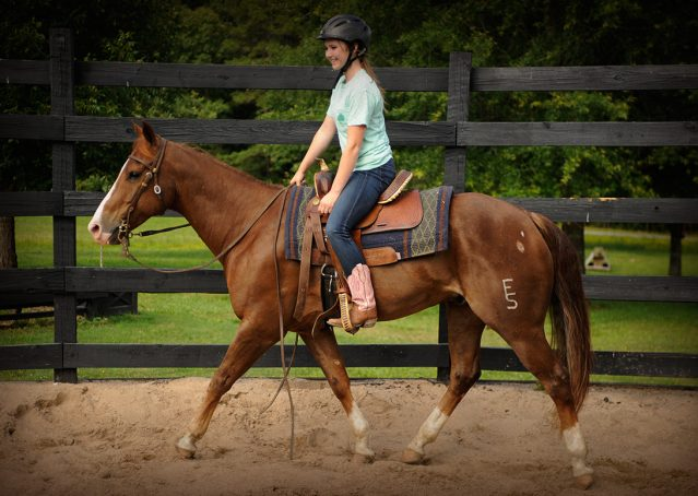 022-Smarty-AQHA-gelding-for-sale