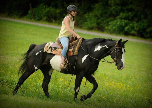 022-Titan-Black-and-white-paint-gelding