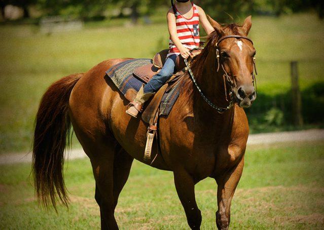 023-Clark-AQHA-horse-for-sale