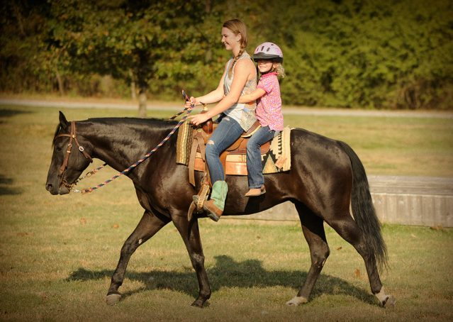 023-Hollywood-AQHA-gelding-for-sale