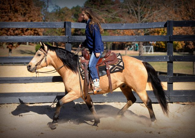 023-Hotrod-AQHA-Buckskin-Gleding-For-Sale