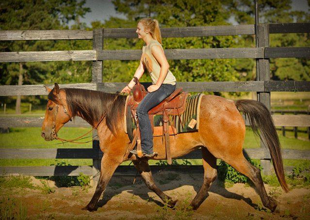 023-Jasper-Bay-Roan-Quarter-horse-gelding-for-sale