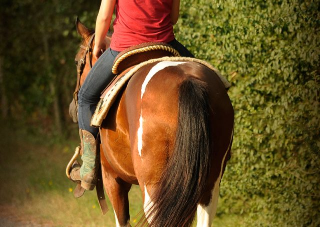 023-Lena-APHA-mare-for-sale