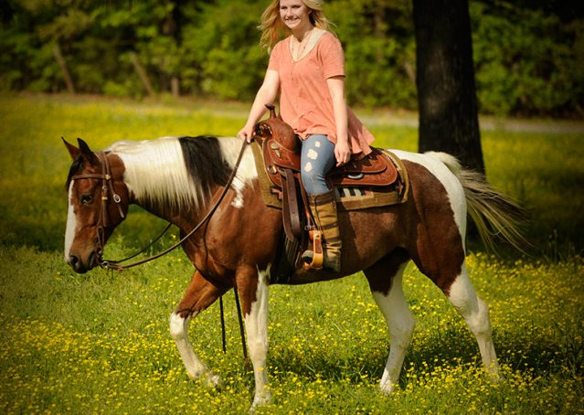 023-Rebel-APHA-Bay-Tobiano-Gelding-For-Sale