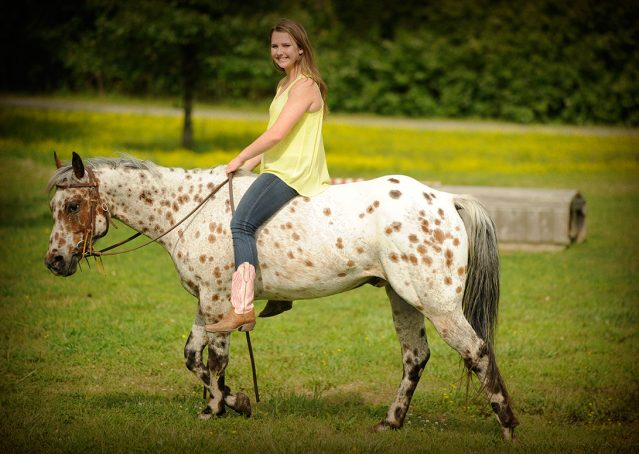023-Shy-appaloosa-pony-for-sale