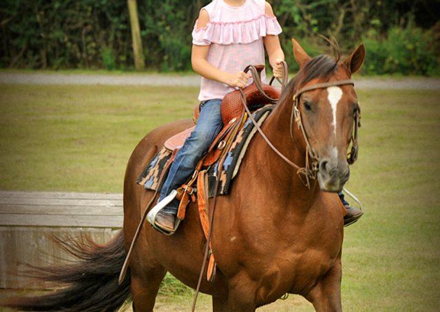 023-Stone-Bay-Quarter-Horse-Gelding-For-Sale
