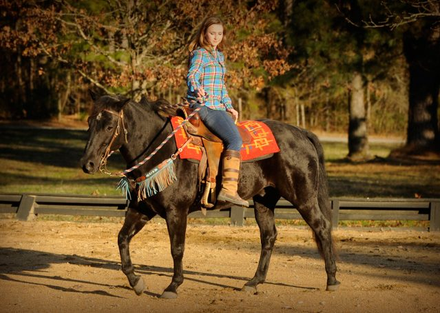 023-Thunder2-black-aqha-gelding-for-sale