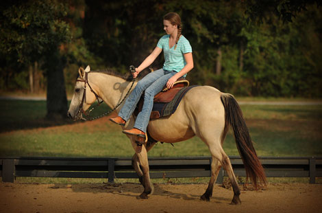 024-Buckskin-Pony-Mare-For-Sale-Jill