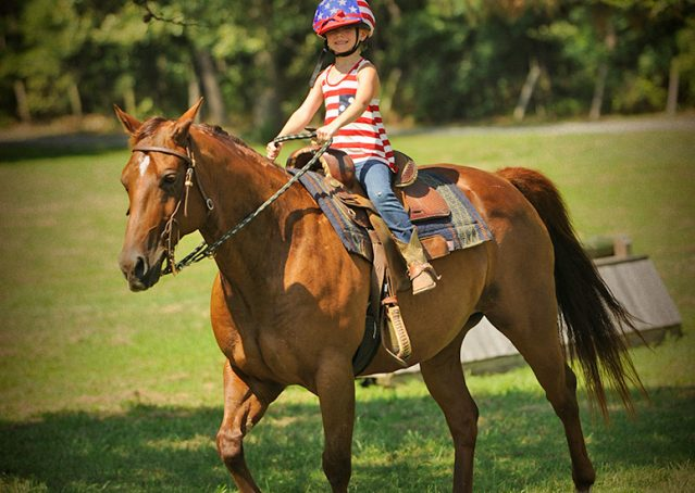024-Clark-AQHA-horse-for-sale