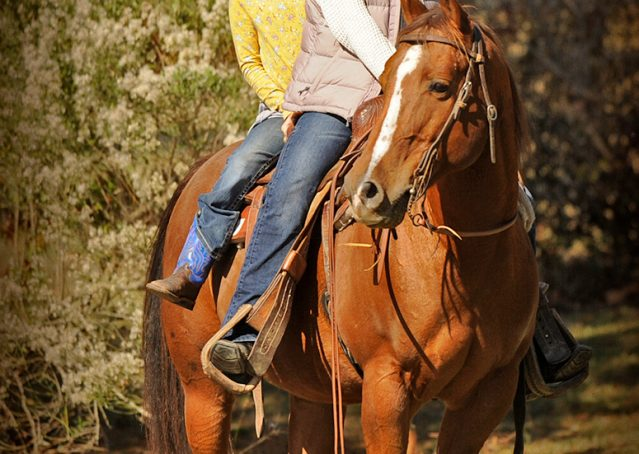 024-Jack2-Chestnut-AQHA-Gelding-For-Sale