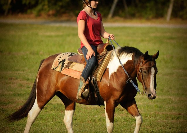 024-Lena-APHA-mare-for-sale