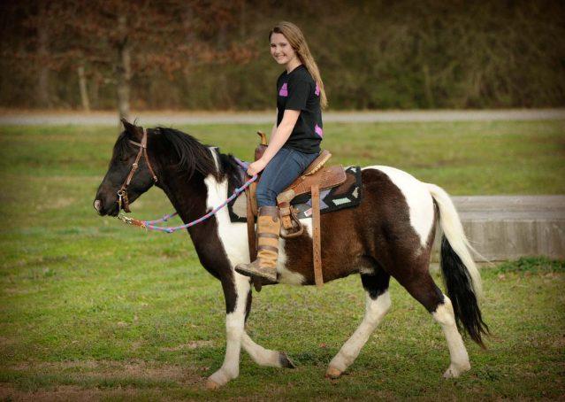 024-Rocky-paint-pony-gelding-for-sale