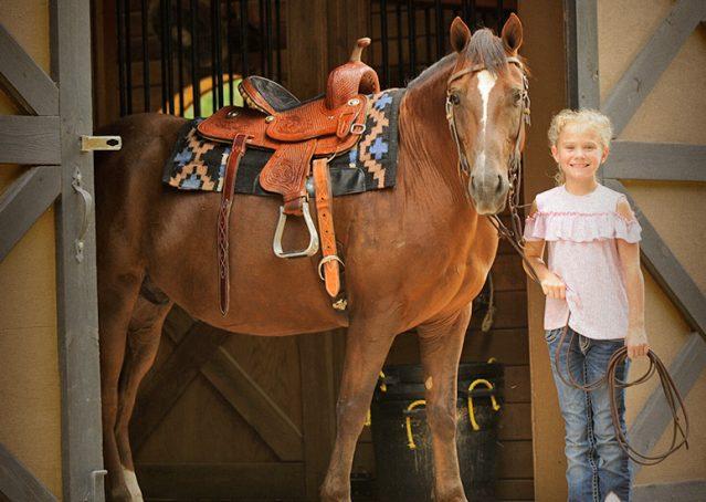 024-Stone-Bay-Quarter-Horse-Gelding-For-Sale