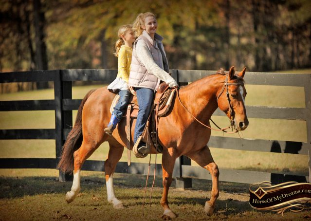 025-Jack2-Chestnut-AQHA-Gelding-For-Sale