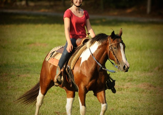 025-Lena-APHA-mare-for-sale